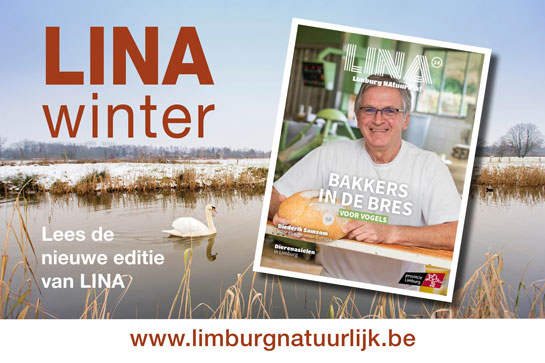 Lina winter - www.limburgnatuurlijk.be